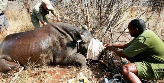 Rhino, WWF
