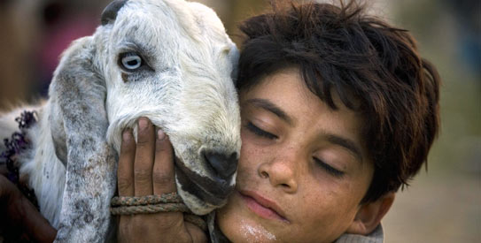 Soaring livestock prices hit Eid sacrifices in Pakistan