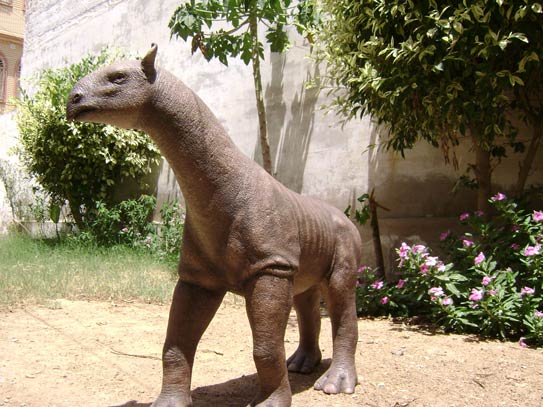 One-tenth scale fiber glass model of Baluchitherium. – Photo courtesy Asim Mirza