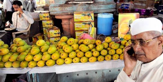 mangoes india
