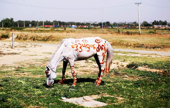 A horse with a local mobile number painted on it, is left for rent, on a roadside in Islamabad. – Photo by AP