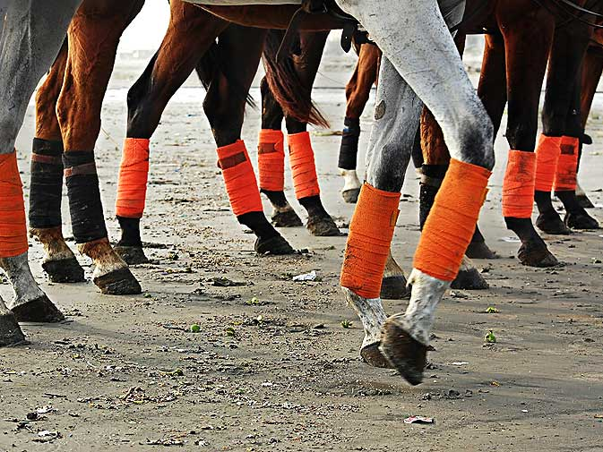 A team of horses come together in the sandy arena. Teams are distinguished by colour of the polo wraps, bandages which are used to protect against minor scrapes and prevent irritation from sand. controls the horse.