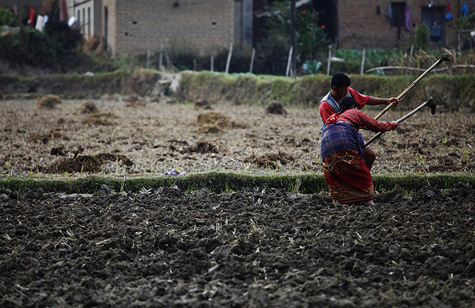 Farmers prepare field for planting wheat at Chunnikhel, Nepal.
