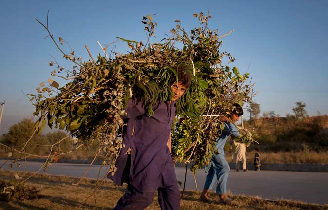 ?	Pakistani boys walk home after collecting dry wood for fires on the outskirts of Islamabad, Pakistan Wednesday. - AP Photo