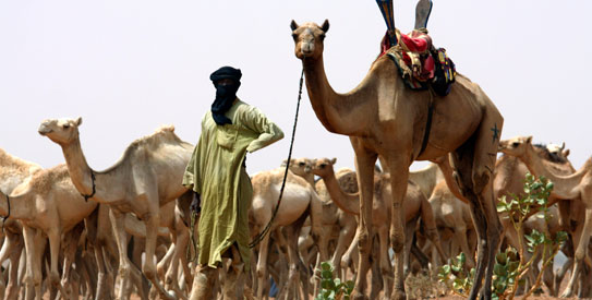 A nomad from the Tuareg tribe of the Sahara Desert brings his herd for vaccination to a team of US Special Forces in the Sahara Desert handing out aid near the town of Gao in northeastern Mali. With almost no resistance, al-Qaeda in the Islamic Maghreb, or AQIM, is implanting itself in Africa's soft tissue, choosing as its host Mali, one of the poorest nations on earth. —AP Photo