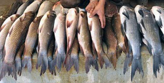 Камчатская рыба «поплыла» в Китай