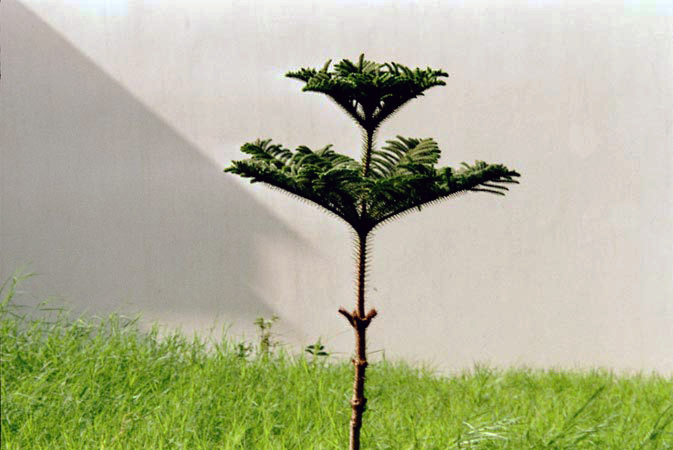 ?I have planted this tree. I like it very much. I take care of it with my father. We get fresh air because of this tree.?   ? Khurram Sharif, 21-year-old male, TB Patient