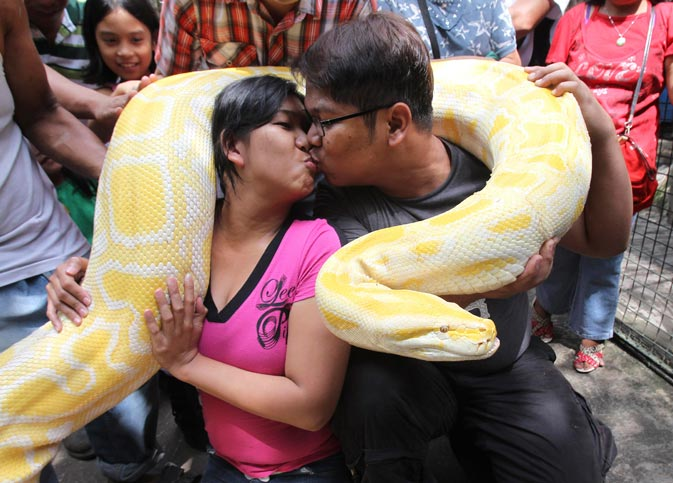 Eroll Escobar kisses his partner Princess Madrolejo as they pose for photographers while carrying a 16-feet and 200 kg Albino Burmese Python during a Valentine's Day presentation inside a Malabon zoo, north of Manila. – Reuters Photo.
