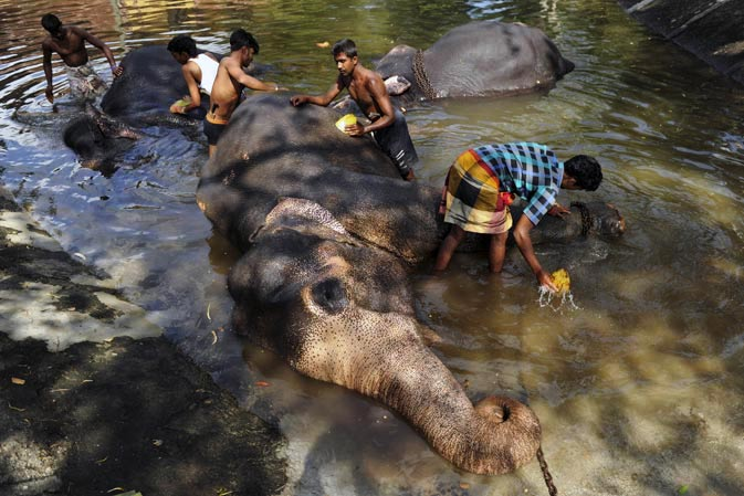 The elephant keepers