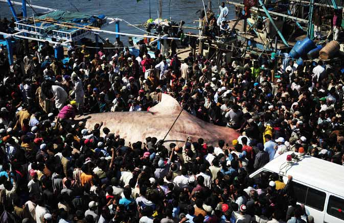 Curious onlookers crowd around the carcass of a whale shark at a fish harbour in Karachi. ? AFP Photo