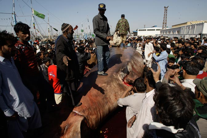 People surround a carcass of a whale shark in Karachi.? AP Photo