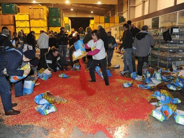 Anti-GMO activists rip open bags containing 'MON 810', a variety of genetically modified maize (corn) developed by Monsanto company after entering a Monsanto storehouse on January 23, 2012 in Trebes near Carcassonne, southern France. – AFP Photo