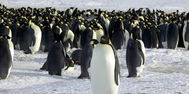 13042012-Penguin-satellite-R660