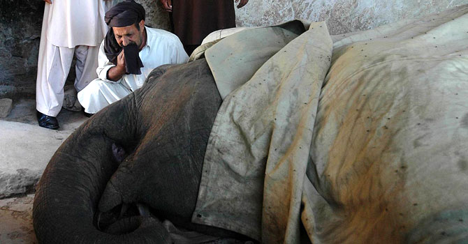 Caretaker of female elephant 'Saheli' weeps at Margazar Zoo in Islamabad. – Photo by Online