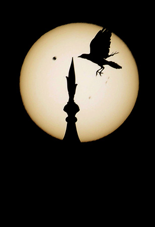 A bird comes in to land atop one of the domes of the landmark Taj Mahal as Venus, top left, begins to pass in front of the sun, as visible from Agra, India, Wednesday, June 6, 2012. People around the world turned their attention to the daytime sky on Tuesday and early Wednesday in Asia to make sure they caught the rare sight of the transit of Venus. ? Photo by AP