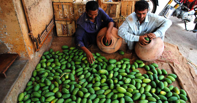 Following the damage caused by last year's monsoon to the mango orchards, temperature variations left a substantial effect on mango crop this year, affecting its production. – Photo by Muhammad Hussain Khan/Dawn.com