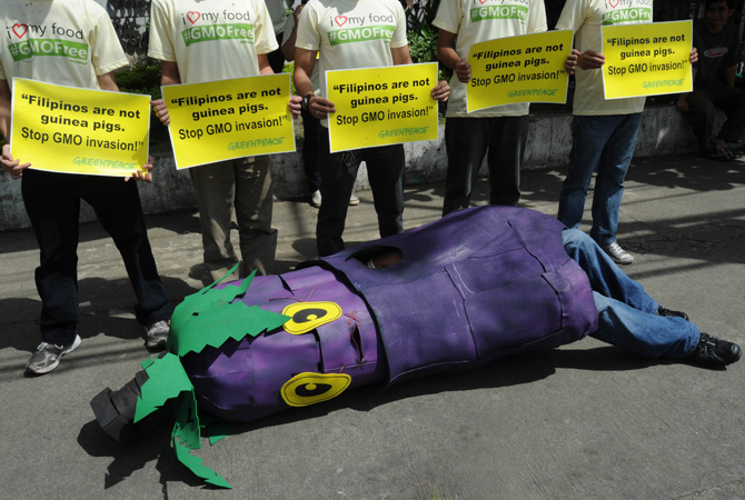 An environmental activist from Greenpeace decked out as an eggplant, lies down in front of colleagues outside of the Department of Agricultural and the Department of the Environment in Manila on World Environment Day. The protesters called on the government to stop the introduction of genetically-modified products into the food chain. ? Photo by AFP