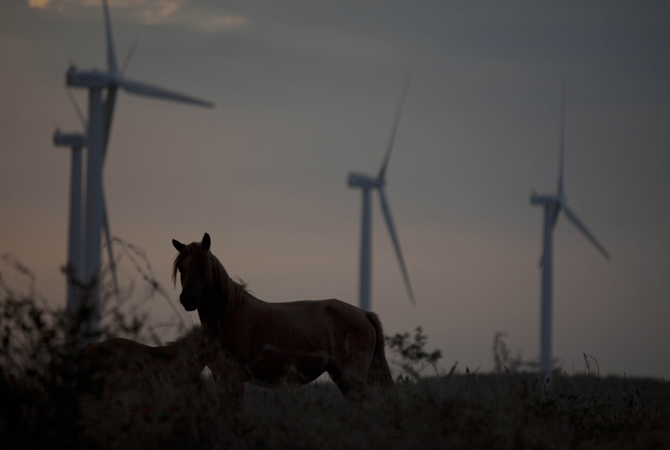 Horses are seen nearby the wind farm ?Amayo?, located 115km South of Managua, the first wind power project of Nicaragua which spreads over 280ha and consists of 19 wind turbine generators. ? Photo by AFP