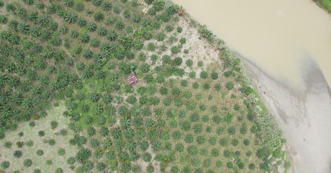 In this Feb. 16, 2012 aerial photo taken by a drone and released by ConservationDrones.org., a river runs by a field of palm trees during a drone mission in a tropical rain forest in Aceh, Sumatra, Indonesia. This year, conservation drone pioneer Lian Pin Koh of the Swiss Federal Institute of Technology and partner Serge Wich have flown more than 200, mostly test runs in Asia using an improved 2.0 version of drones with a 2-meter (6.5 foot) wing span, air time of 45 minutes and a 25-kilometer (15.5-mile) range  to track endangered wildlife, spot poachers and chart forest loss. (AP Photo/ConservationDrones.org) NO SALES, EDITORIAL USE ONLY