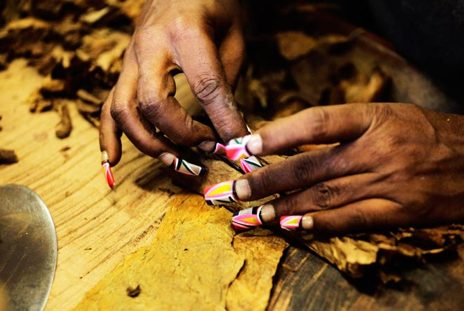 A factory worker with brightly colored nails rolls some cigars. ? Photo by Reuters