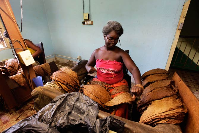 Tobacco leaves are delivered and sorted before being pressed. ? Photo by Reuters
