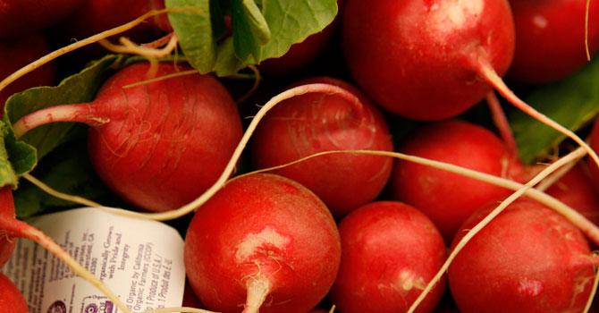 organic-radishes-AP-670