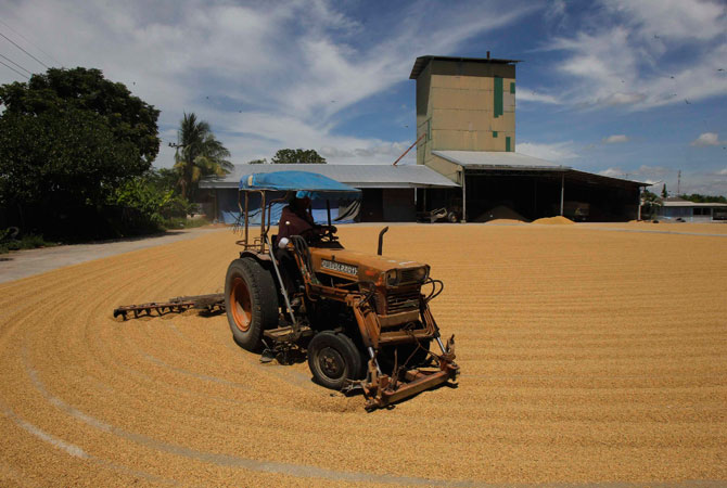 A worker uses a tractor to spread rice grains at a mill in Suphan Buri province, about 105 km miles north of Bangkok October 5, 2012.