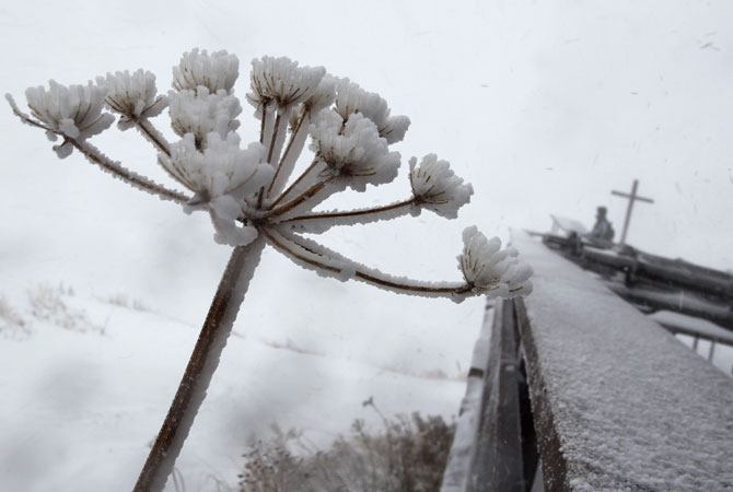 A plant is covered in snow and ice at the Hoefatsblick mountain station on the Nebelhorn mountain near Oberstdorf, southern Germany. The Nebelhorn is a 2,224 meters high mountain in the German Alps. ? Photo by AFP