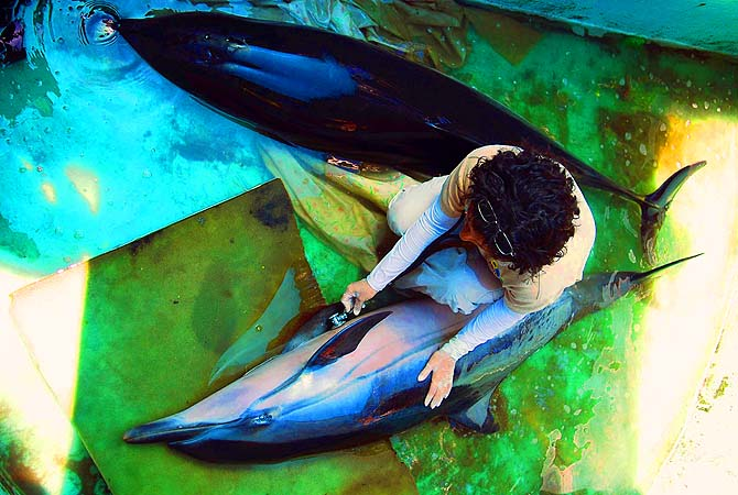 [Lacerated beauty.]
