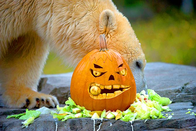 [One tough pumpkin.]