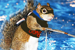 It's not about death and water skiing squirrels