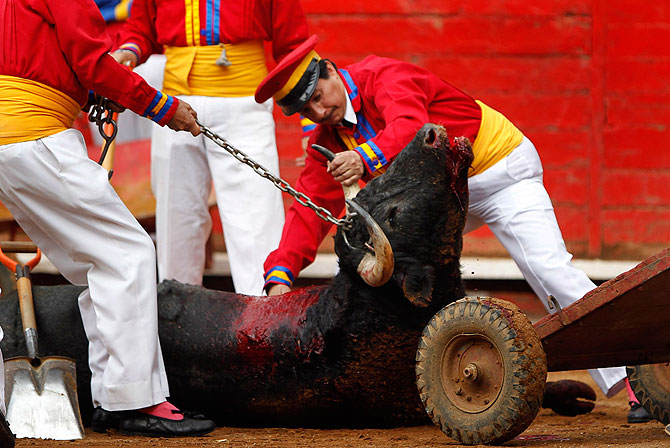 Monosabios remove a dead bull from the ground at La Mexico bullring in Mexico City August 26, 2012.