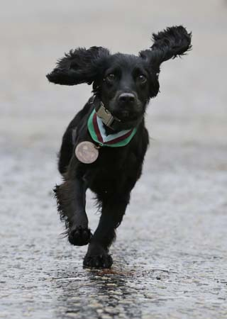 A moment for our quadruped brothers in arms. 
