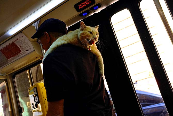 [Man confuses cat for scarf. Cat furious.]