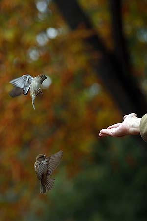 [Dance of flight.]