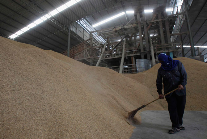 A man shovels rice grains at a mill in Suphan Buri province. Thailand exported 4.3 million tonnes of rice so far this year, down 46 percent from the same period of last year, because the intervention scheme pushed Thai prices to uncompetitive levels versus rice from Vietnam and India.