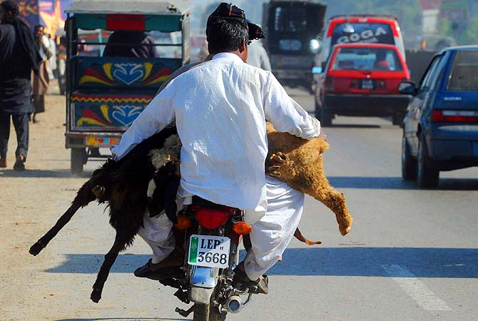 [Defying physics. Like a boss.]