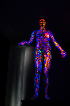 An exhibit, one which is locked for the general public unless one asks to see it, explains human anatomy with a 30-minute light and sound show.