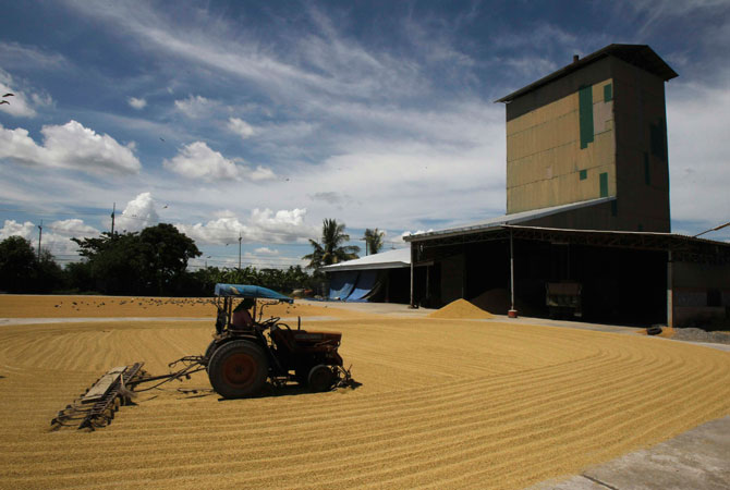 A worker uses a tractor to spread rice grains at a mill in Suphan Buri province, around 105 km north of Bangkok October 5, 2012. The Thai Rice Exporters Association forecasts full-year exports will reach no more than 6.5 million tonnes.