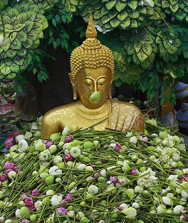 Lotus flowers are thrown by worshippers on to a Buddha statue during the Lotus Flower Receiving Festival Monday, in Thailand. The festival was held annually to celebrate the finish of Buddhist Lent and the end the rainy season.?Photo by AP
