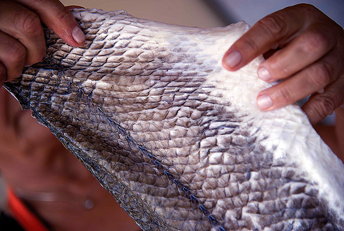 Esther Nunez of Argentina, treats fish skin to make a type of leather to be used in fashion and to make eco-friendly jewellery ? Reuters Photo