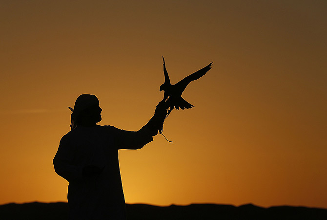 An Emirati man holds his falcon at the Liwa desert, 220 kms west of Abu Dhabi, on the sidelines of the Mazayin Dhafra Camel Festival. ? AFP Photo