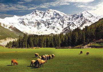Fairy Meadows, Nanga Parbat – photo courtesy Mustansar Hussain Tarar