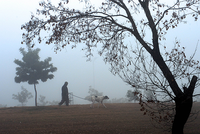 A Pakistani resident walks with his dog during a cold and foggy morning in Islamabad on January 8, 2013. Ongoing foggy weather in Punjab and other parts of the country has badly affected flight and rail schedules. ? AFP Photo
