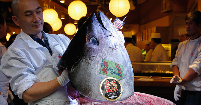 Kiyomura Co's employee holds the head of a 222 kg (489 lbs) bluefin tuna after cutting its meat at the company's sushi restaurant outside Tsukiji fish market in Tokyo January 5, 2013. Kiyomura Co's President Kiyoshi Kimura, who runs a chain of sushi restaurants, won the bid for the tuna caught off Oma, Aomori prefecture, northern Japan, with a record 155.40 million yen (1,762,700 USD) at the fish market's first tuna auction this year.  REUTERS/Toru Hanai (JAPAN - Tags: ANIMALS BUSINESS FOOD SOCIETY TRAVEL)