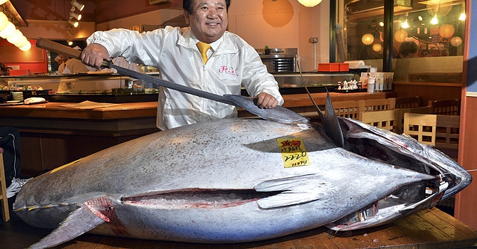 President of sushi restaurant chain Sushi-Zanmai, Kiyoshi Kimura, displays a 222kg bluefin tuna at his main restaurant near Tokyo's Tsukiji fish market on January 5, 2013. The bluefin tuna was traded at 155.4 million yen (1.77 million USD) at the wholesale market, smashing a previous record.    TOPSHOTS     AFP PHOTO / Yoshikazu TSUNO