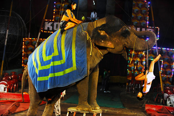 A highlight performance of stunts with an elephant.