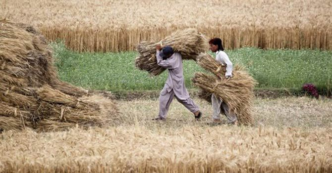 pakistan-iran-wheat-600