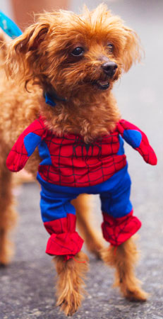 A spider-dog is seen during the ?Blocao? dog carnival parade. ?Photo by AP