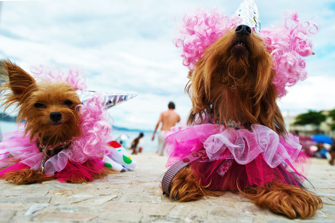 Dogs wearing carnival costume take a rest. ?Photo by AFP